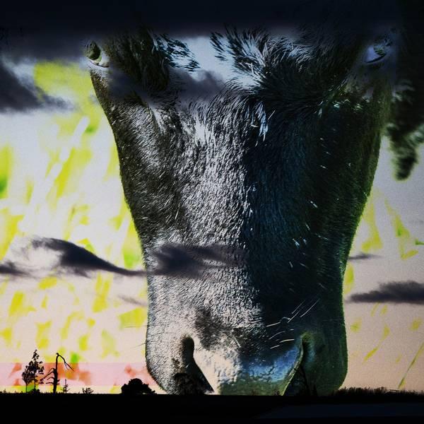 Bilde av Cow 20 x 20 cm Nr 26 GUL