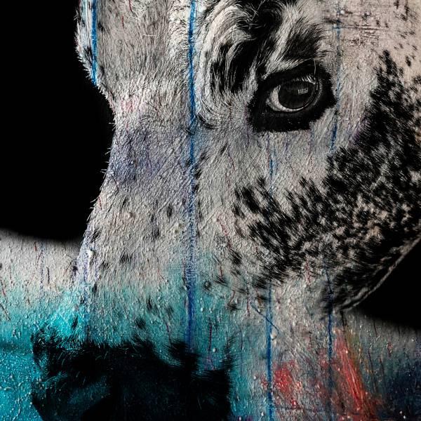 Bilde av Cow 20 x 20 cm Nr 09