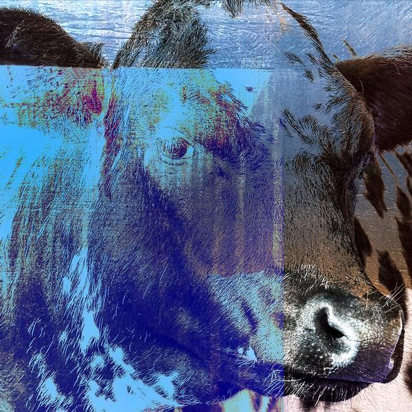 Bilde av Cow 20 x 20 cm Nr 13        -