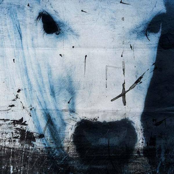 Bilde av Cow 20 x 20 cm Nr 06